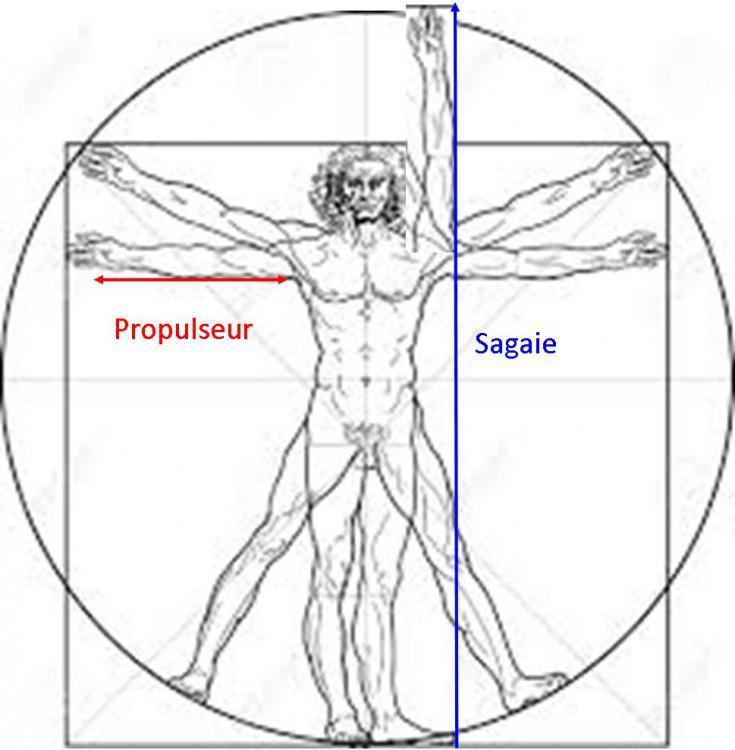 proportions.jpg