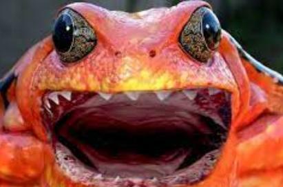 grenouille-charente.jpg